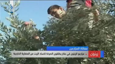 REPORT: Olive farmers in Akkar take action