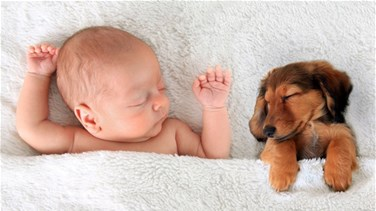 Can Puppies Protect Babies From Allergies And Obesity?