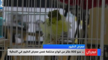 Importance of birds highlighted at Nabatieh exhibition