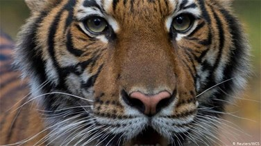 Tiger at New York's Bronx Zoo tests positive for coronavirus